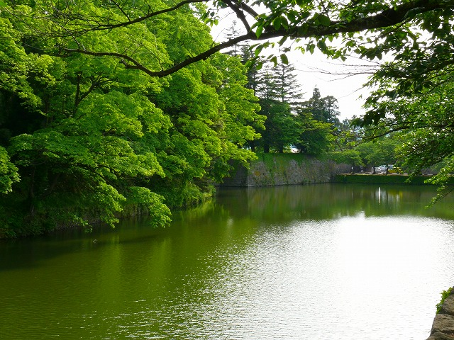 新緑の鶴ヶ城_f0032130_20473646.jpg