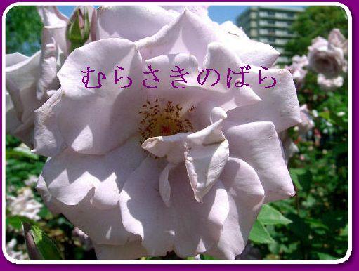 f0031546_20365918.jpg