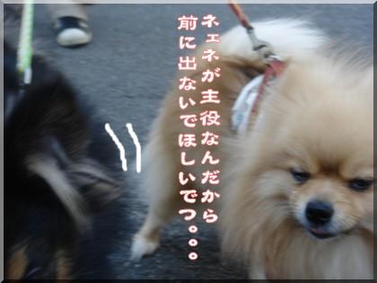 b0078073_2151319.jpg