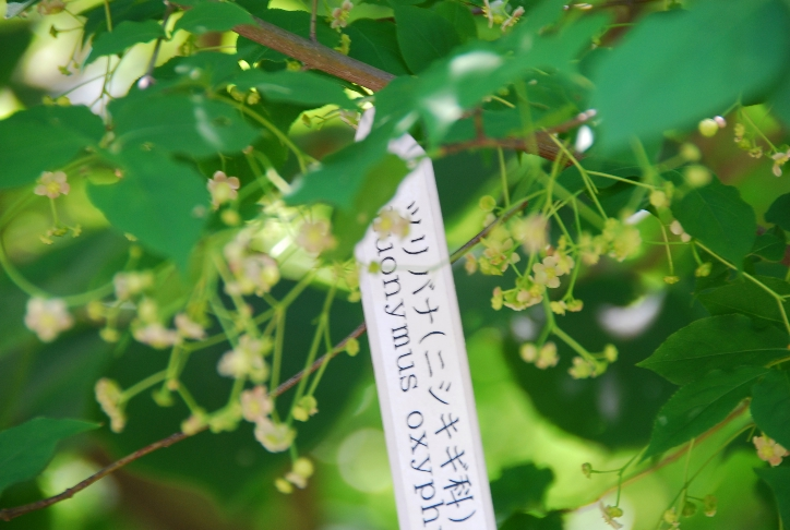 吊り花の花@皇居東御苑_d0056382_21355983.jpg