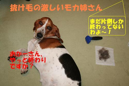 f0121712_910337.jpg