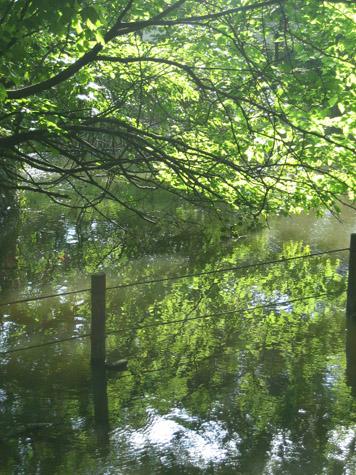 葦の池 善福寺公園_c0107829_2043371.jpg