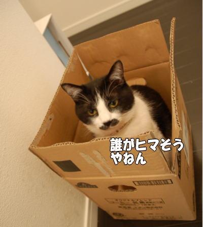 b0041182_21463480.jpg