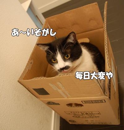 b0041182_21511012.jpg