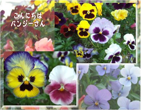 f0004182_19214092.jpg