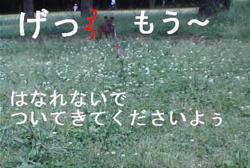 f0123589_16514658.jpg