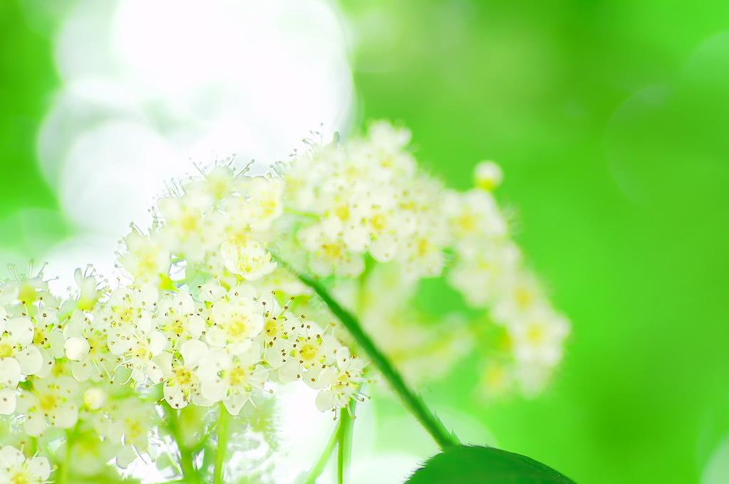 Bright Nana _f0033205_912130.jpg