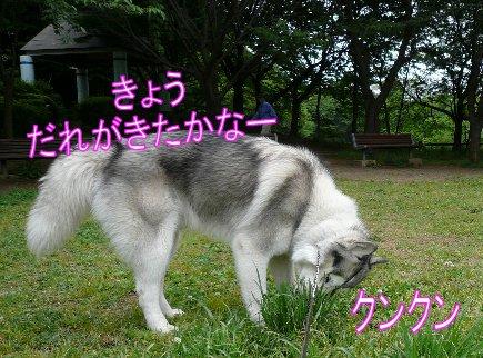 f0112407_1538360.jpg
