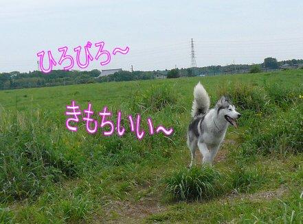 f0112407_1539370.jpg