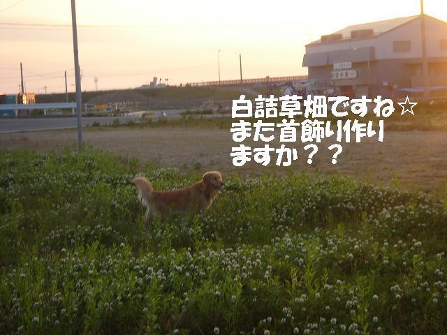 f0114128_1113849.jpg