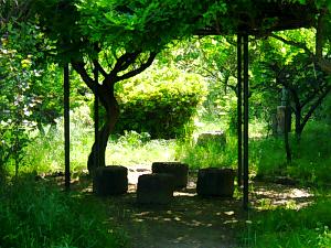 公園の一角、鬱そうと茂った草木の真ん中に石の椅子とその上に藤棚が。光にシルエットだけ浮かぶ椅子や木の幹が不思議な世界を醸し出しています。小さな公園なんですけどね、緑一色の世界です。
