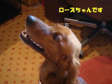 f0046854_2051202.jpg