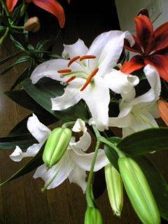大阪からのお客様とゆりの香り_f0008555_16475088.jpg