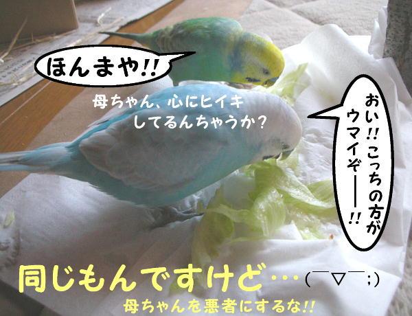 f0132055_104360.jpg