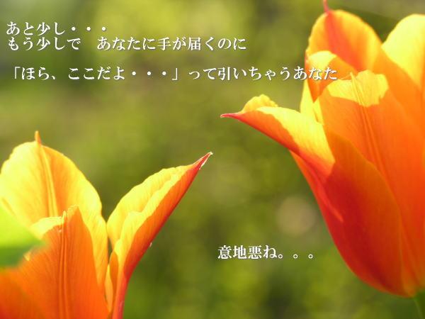 e0118974_22265998.jpg