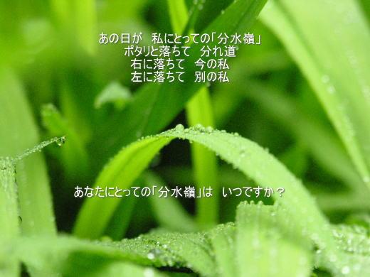e0118974_2262782.jpg