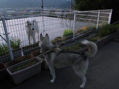 春遍路 第2弾 4月14日 松尾峠をこえて_c0049299_20414031.jpg