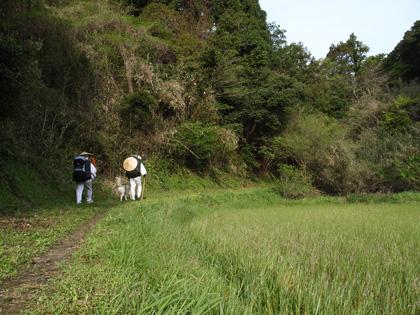 春遍路 第2弾 4月14日 松尾峠をこえて_c0049299_20501648.jpg
