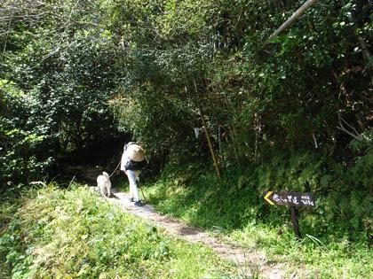春遍路 第2弾 4月14日 松尾峠をこえて_c0049299_21153924.jpg