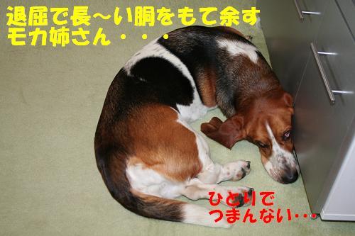 f0121712_16141589.jpg