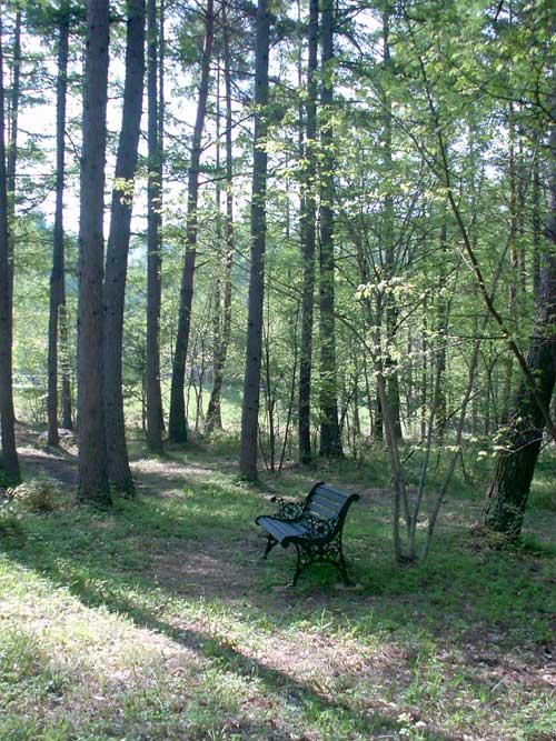 森の中_d0109415_201444.jpg