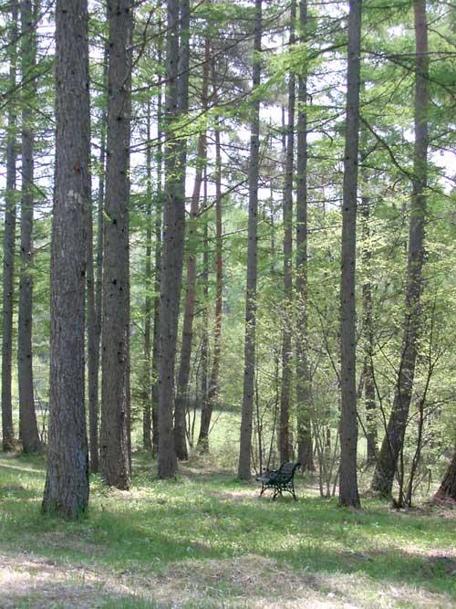 森の中_d0109415_20245720.jpg
