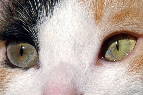 瞳子さんの目_d0084952_14384936.jpg