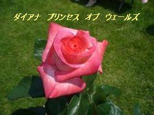 a0100160_2132013.jpg