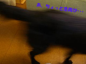 d0043478_229362.jpg
