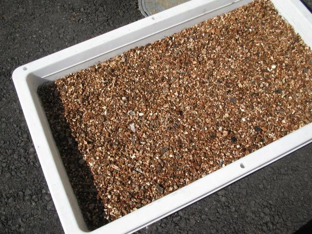 豆・カブの播種_a0008185_10105984.jpg