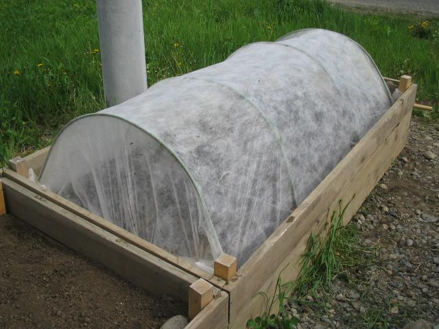 豆・カブの播種_a0008185_9595774.jpg