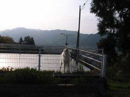 春遍路 第2弾 4月14日 松尾峠をこえて_c0049299_11154117.jpg