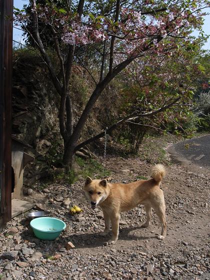 春遍路 第2弾 4月14日 松尾峠をこえて_c0049299_11372983.jpg