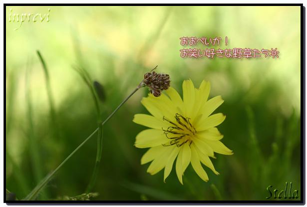 d0015026_965680.jpg
