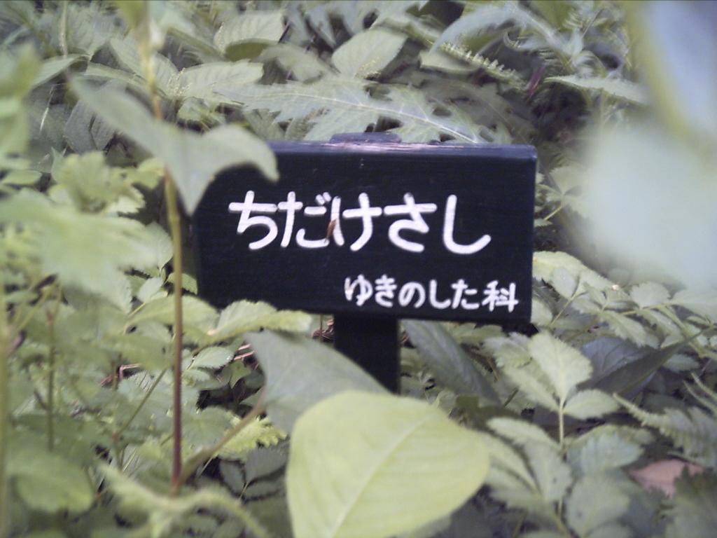 b0019140_19192341.jpg