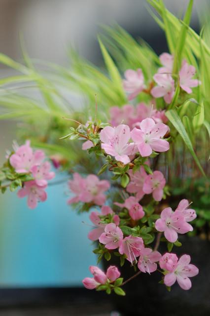 盆栽_c0050163_12512990.jpg