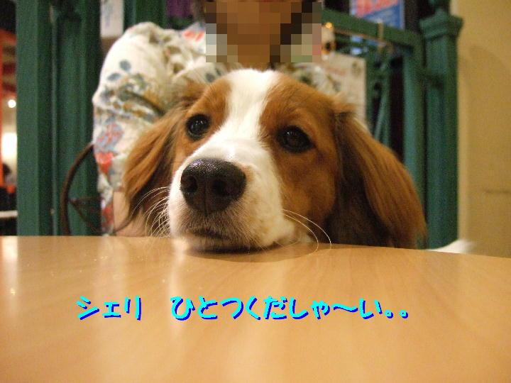 c0075585_84034100.jpg