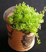 なんともおトクな嬉しい植木鉢です♪_e0063296_1974779.jpg