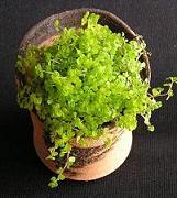 なんともおトクな嬉しい植木鉢です♪_e0063296_1975826.jpg