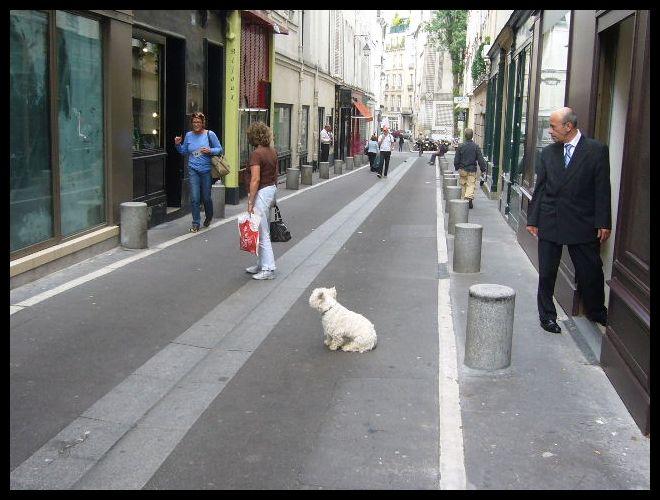 ■街角のワンコ(パリ)_a0008105_20493391.jpg