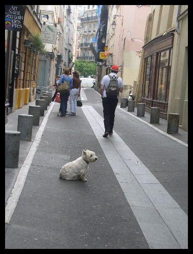 ■街角のワンコ(パリ)_a0008105_20495340.jpg