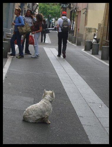 ■街角のワンコ(パリ)_a0008105_2050585.jpg