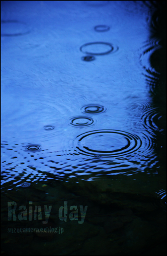 雨の一日_f0100215_1668.jpg