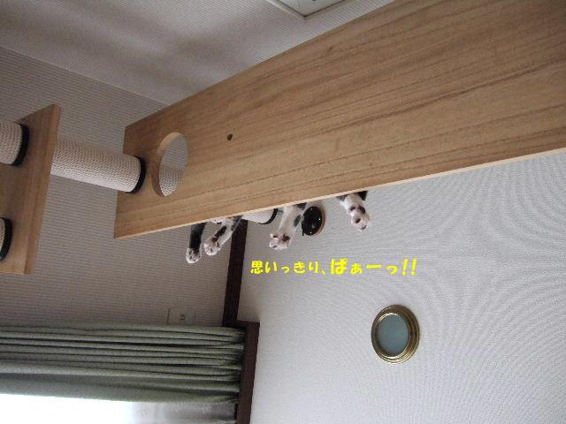 f0032020_11303683.jpg