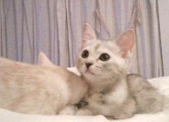 ユマとココ_f0064823_21405482.jpg