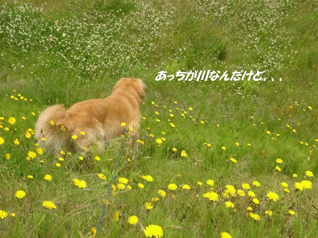 f0114128_14141448.jpg