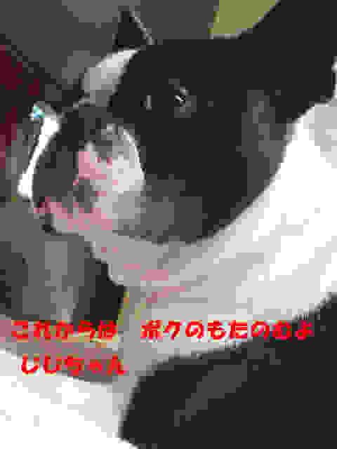 f0059334_1073396.jpg