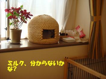 f0046854_2211133.jpg