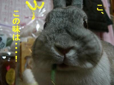 f0104057_053256.jpg