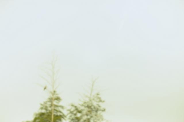 木の枝に鳥がとまっておりました。ピントも合わせずに早朝の感じだけを出そうと思った一枚です。